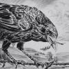 artist rick schaefer drawing crow